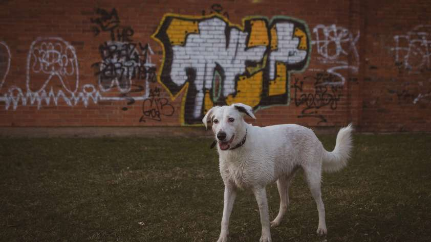 Pet Adoption Shelters Austin