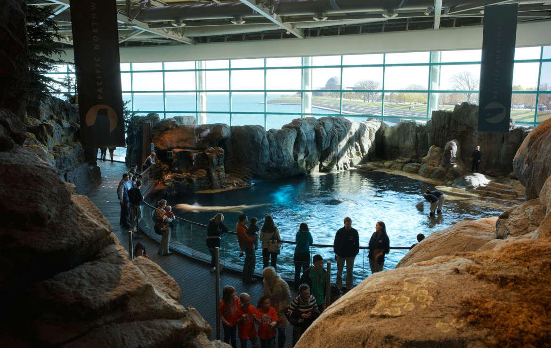 Shedd Aquarium Urbanmatter