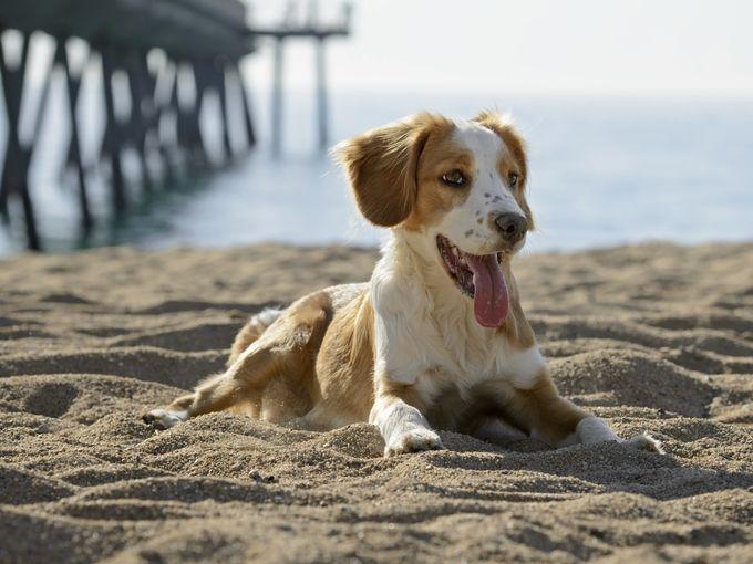1395414217000-Dog-Beach-2-tsik-iStock