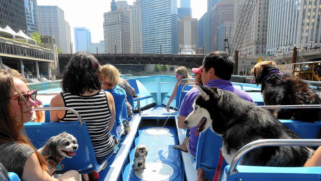 Canine Cruises