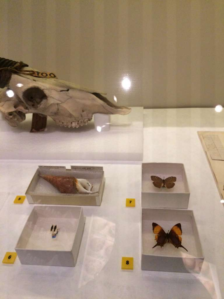 specimens field museum