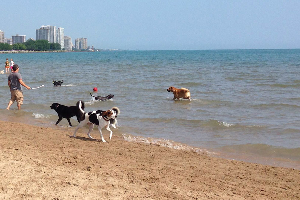 ชายหาดสำหรับหมา