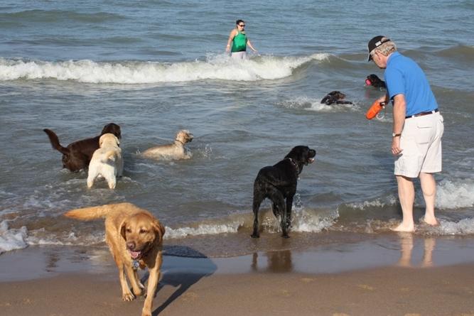 6 Best Dog Beaches in Chicago, Illinois | Urban Matter