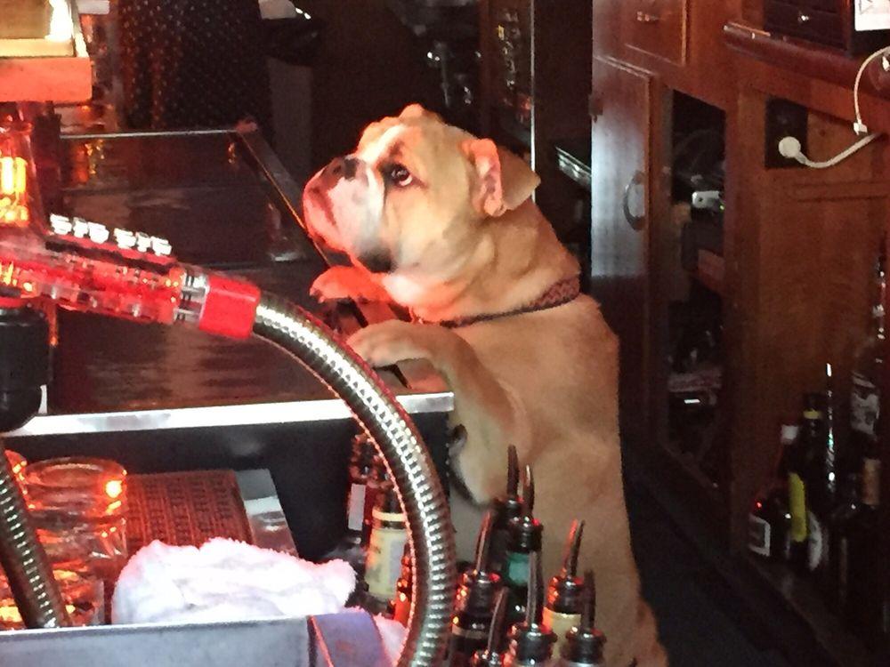 dog-friendly bars chicago