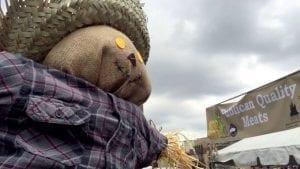 fulton market harvest fest