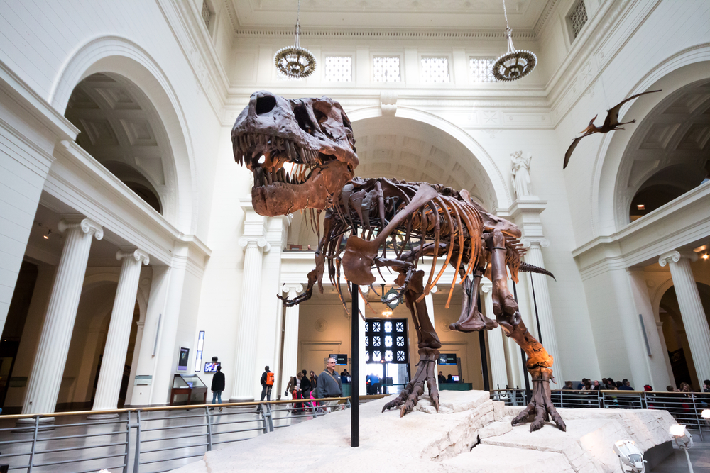 free chicago museum days september