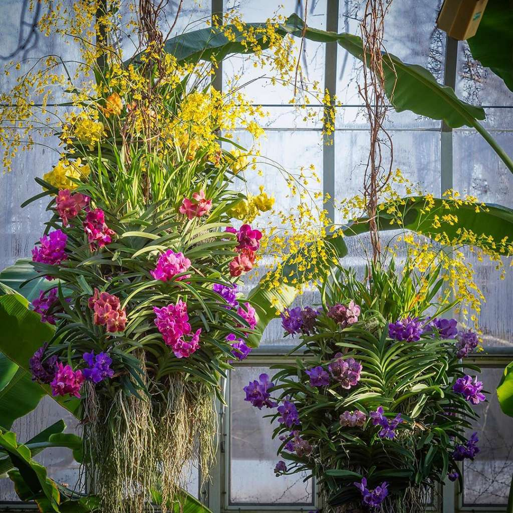 Ordinaire The Annual Chicago Botanic Garden Orchid Show Returns This Spring To  Delight Guests With Thousands Upon Thousands Of Flowers Arranged By Expert  Florists ...