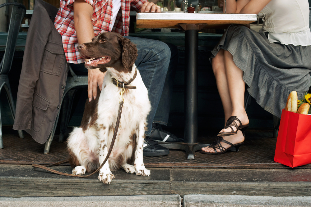 Dog Friendly Restaurants, Patios, Beaches, & Places in Chicago