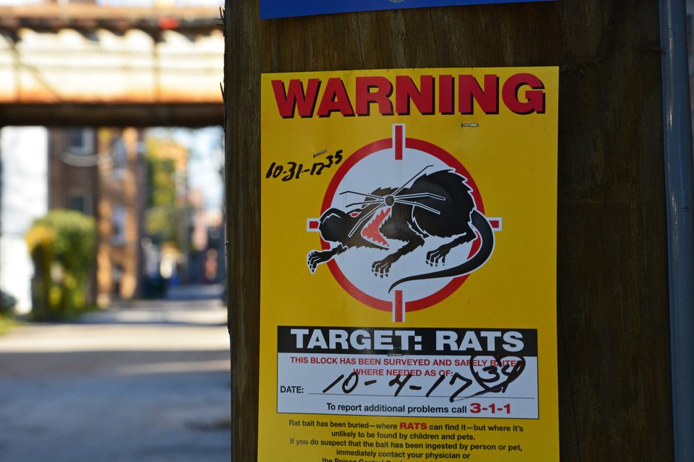 Study Names Chicago the 'Rat Capital' of America