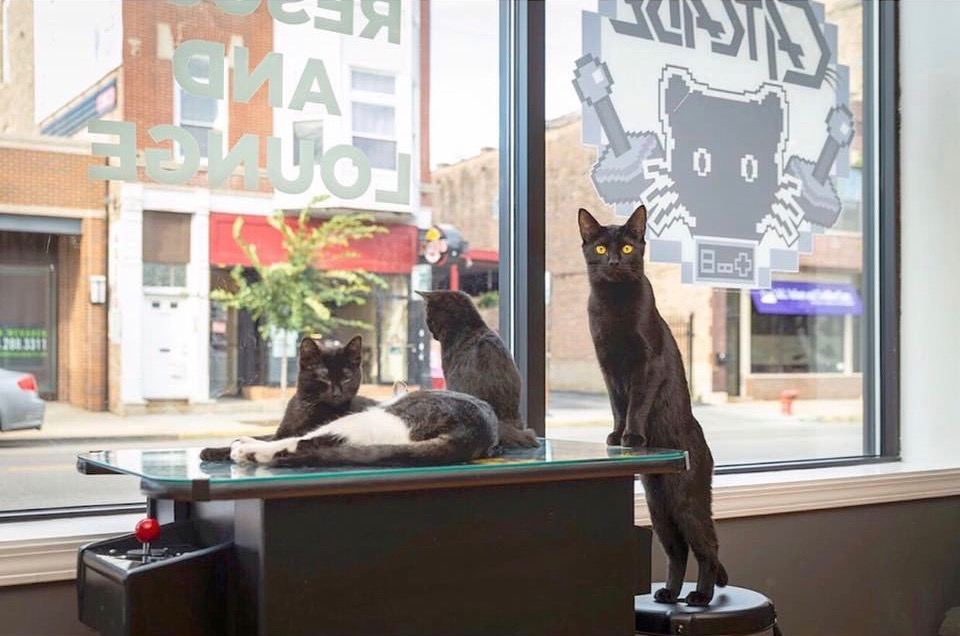 the catcade cat cafes