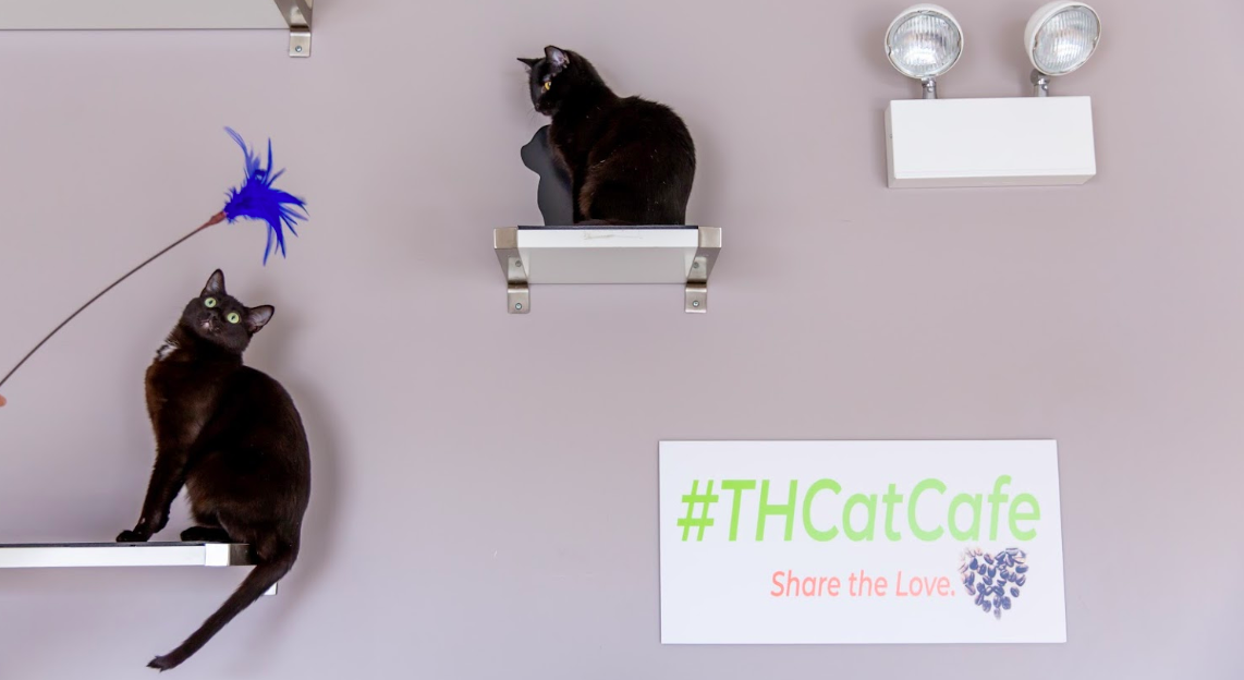 tree house cat cafes