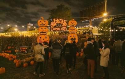jacks pumpkin pop-up