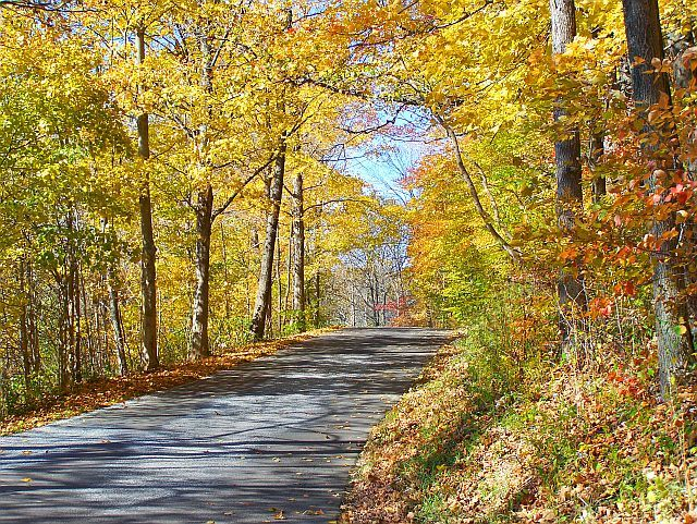 This back road in northern Door county wound around a golden forest before heading back to Hwy 42. (J Jacobs photo)