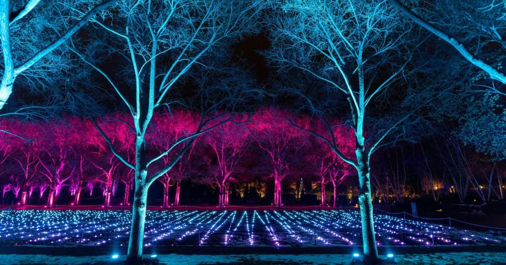 lightscape chicago botanic garden