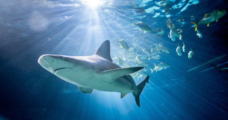 shedd shark feeding tour