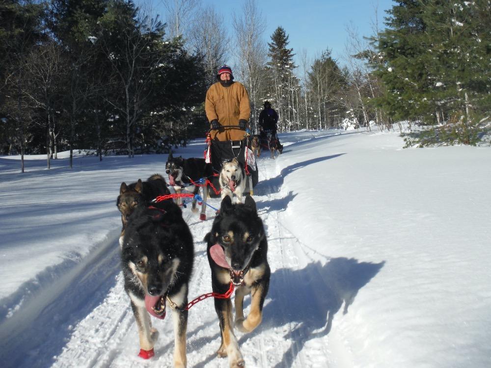 Nature's Kennel dog-sledding upper peninsula