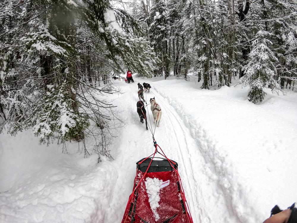 dog-sledding upper peninsula