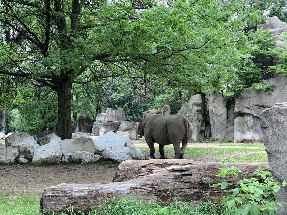 lincoln park zoo reopening
