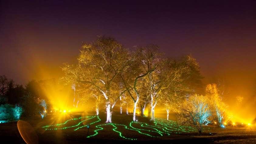 Morton Arboretum Illumination: Tree Lights