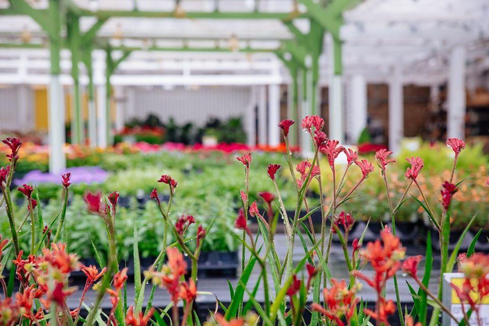 plant shops chicago