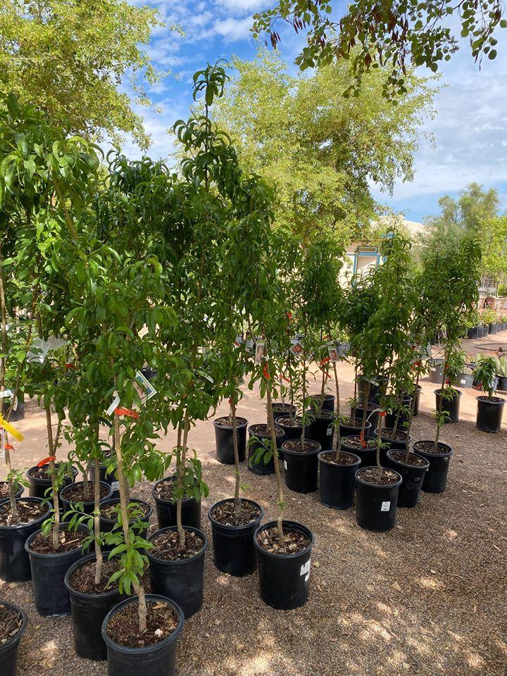 7 Adorable Plant S Nurseries Near