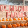 Top 4 Pumpkin Patches Near Phoenix
