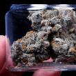 Top Five Cannabis Jobs in Phoenix