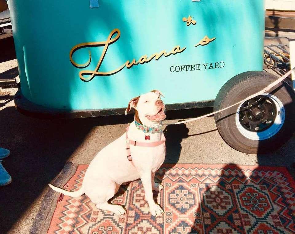 dog-friendly-coffee-shop