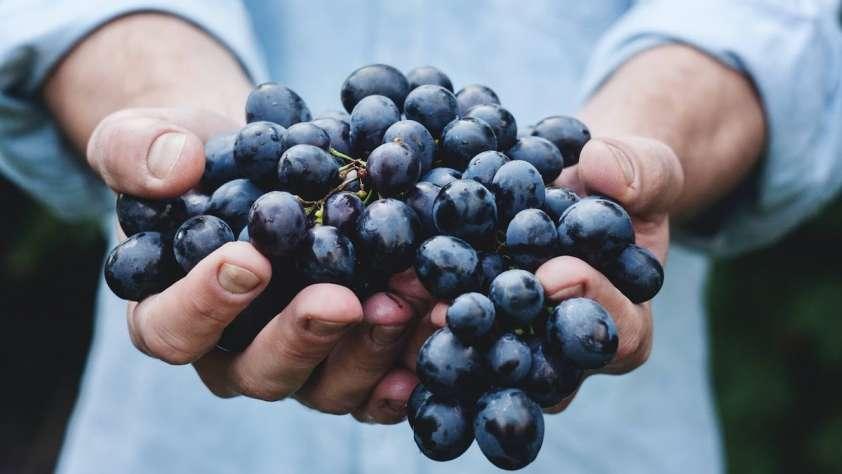 Sassicaia Wines